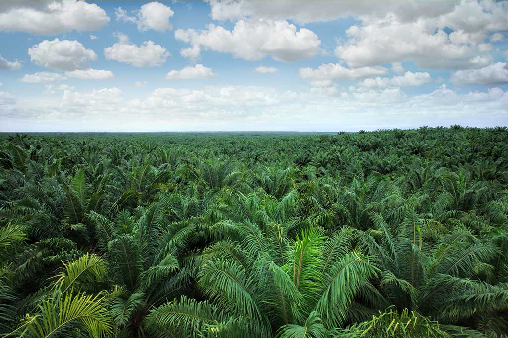 USAID Lestari Project and PT Tunas Sawa Erma collaborate to make a sustainabile palm plantation development model in Papua