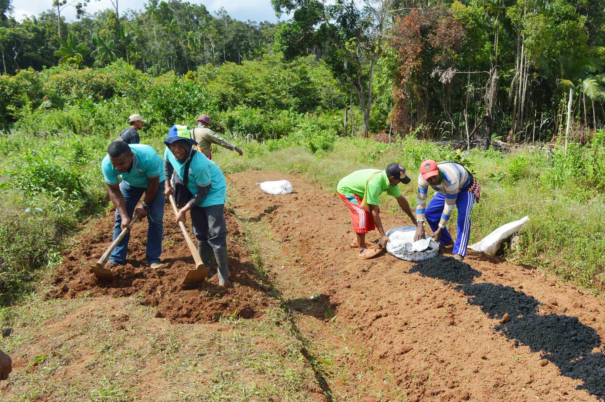 KORINDO Papua Ajari Masyarakat Tanam Sayuran