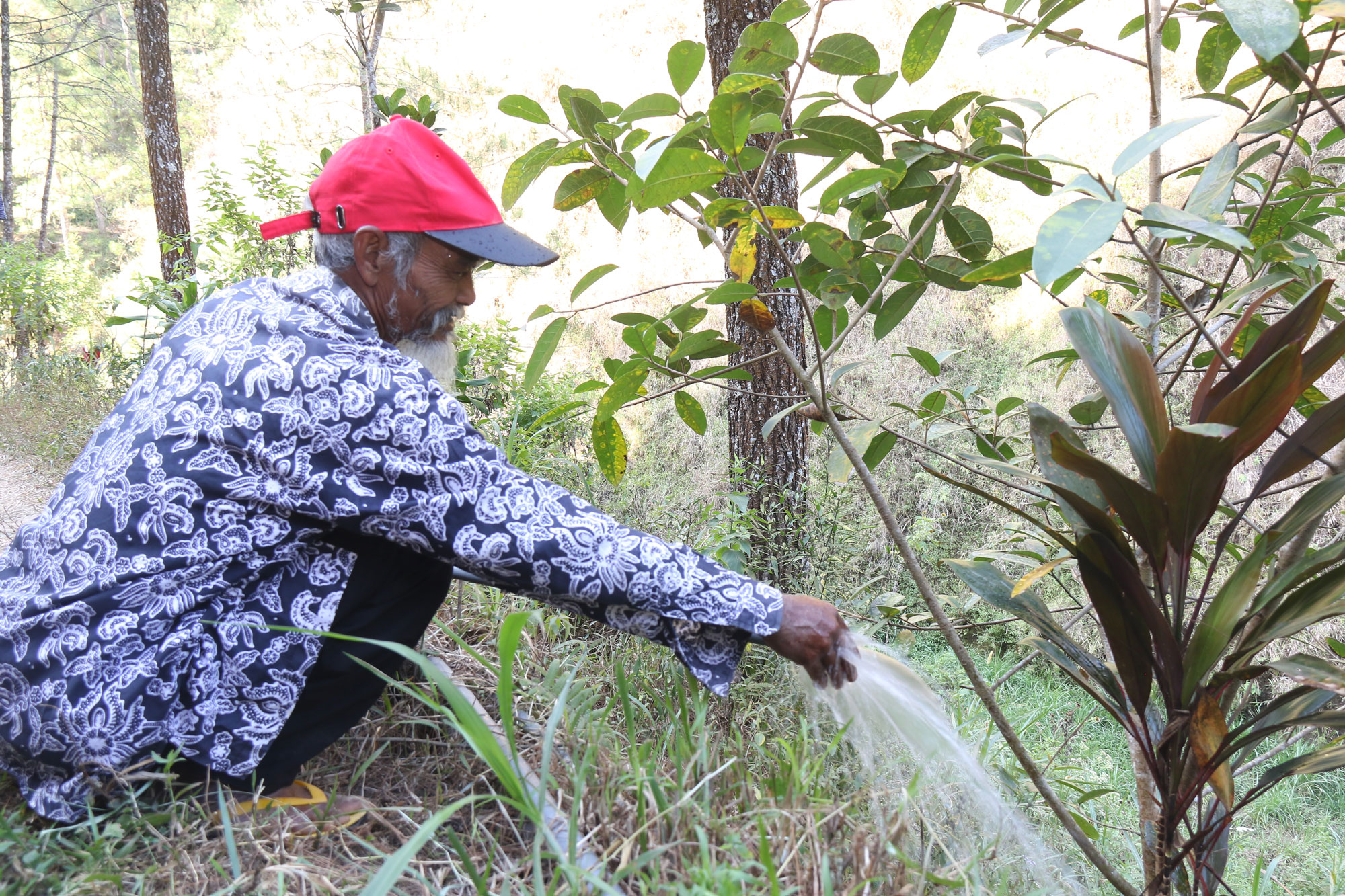 Reforestation project brings back water to C. Java villages