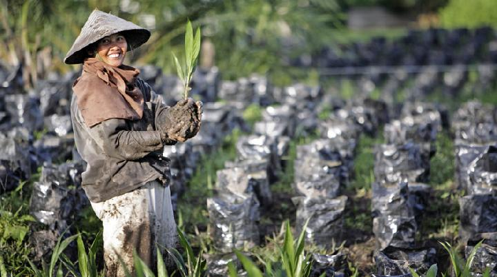 Bappenas: Oil Palm Industry Absorbs 16.2 Million Workers